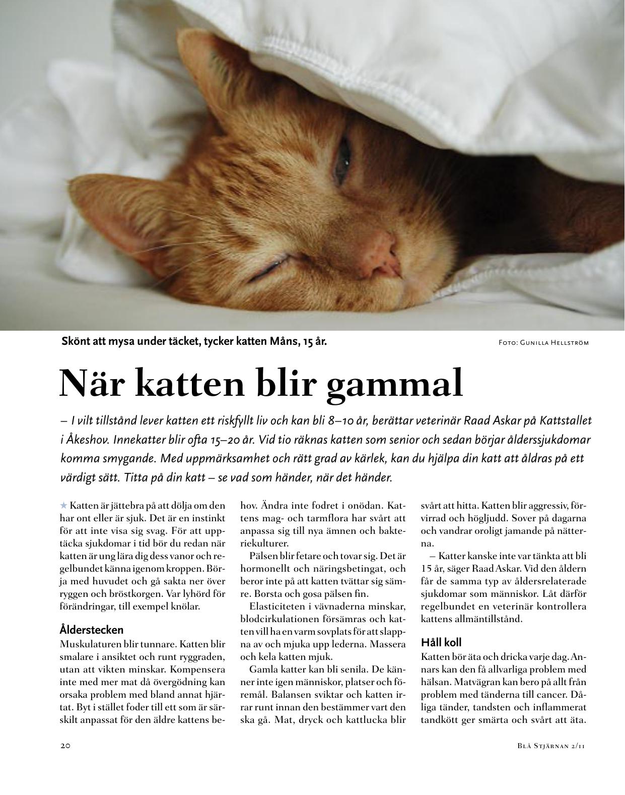 När Katten Blir Gammal