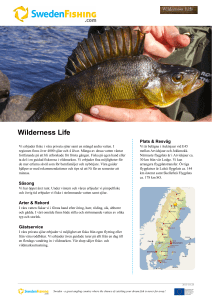 Wilderness Life - Sweden fishing