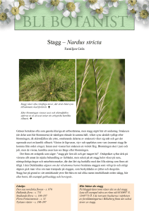 Stagg – Nardus stricta