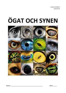 ögat och synen - Andreas undervisning 345e48dabf841