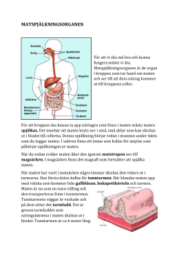 största organet i kroppen