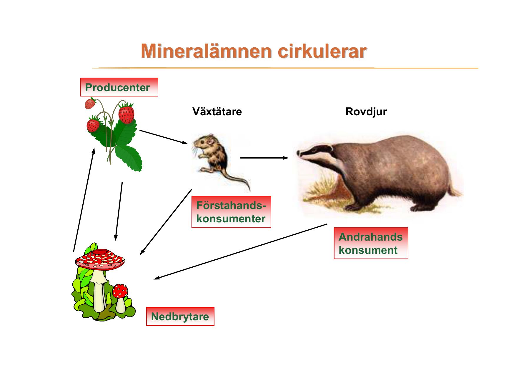 vad är ett mineralämne