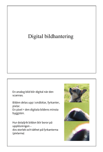 Digital bildhantering