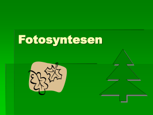 Fotosyntesen - Science