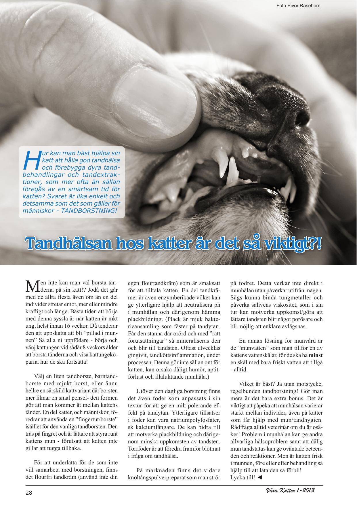 Tandhälsan Hos Katter är Det Så Viktigt