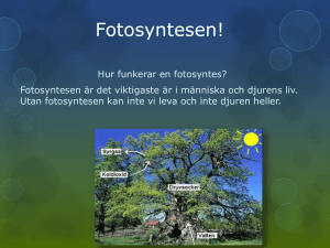 Fotosyntesen!