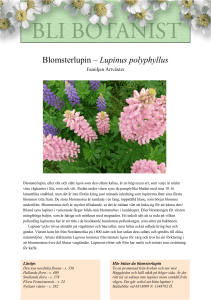 Blomsterlupin – Lupinus polyphyllus
