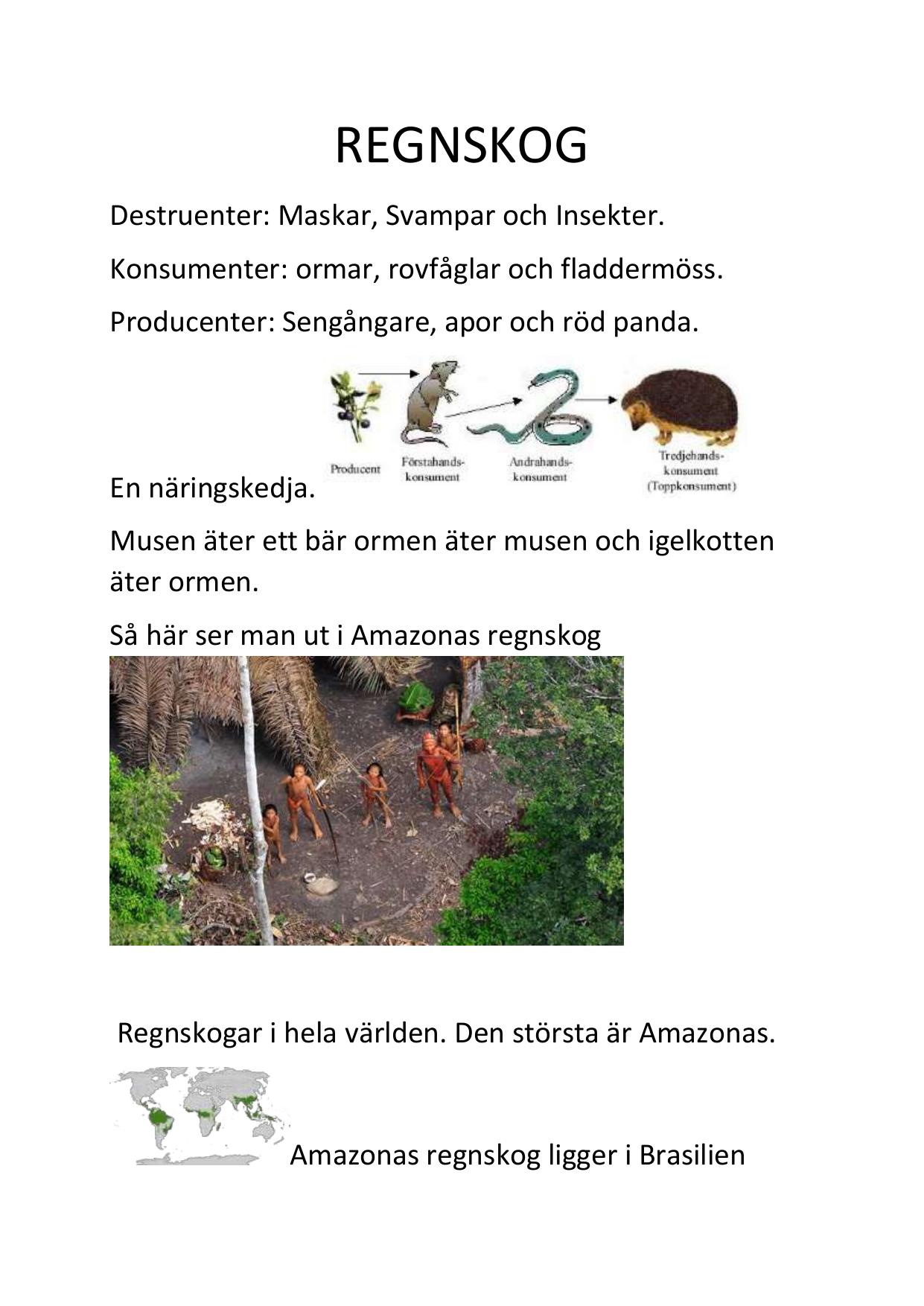 näringskedja i regnskogen