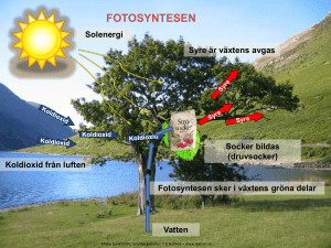 Fotosyntesen - WordPress.com